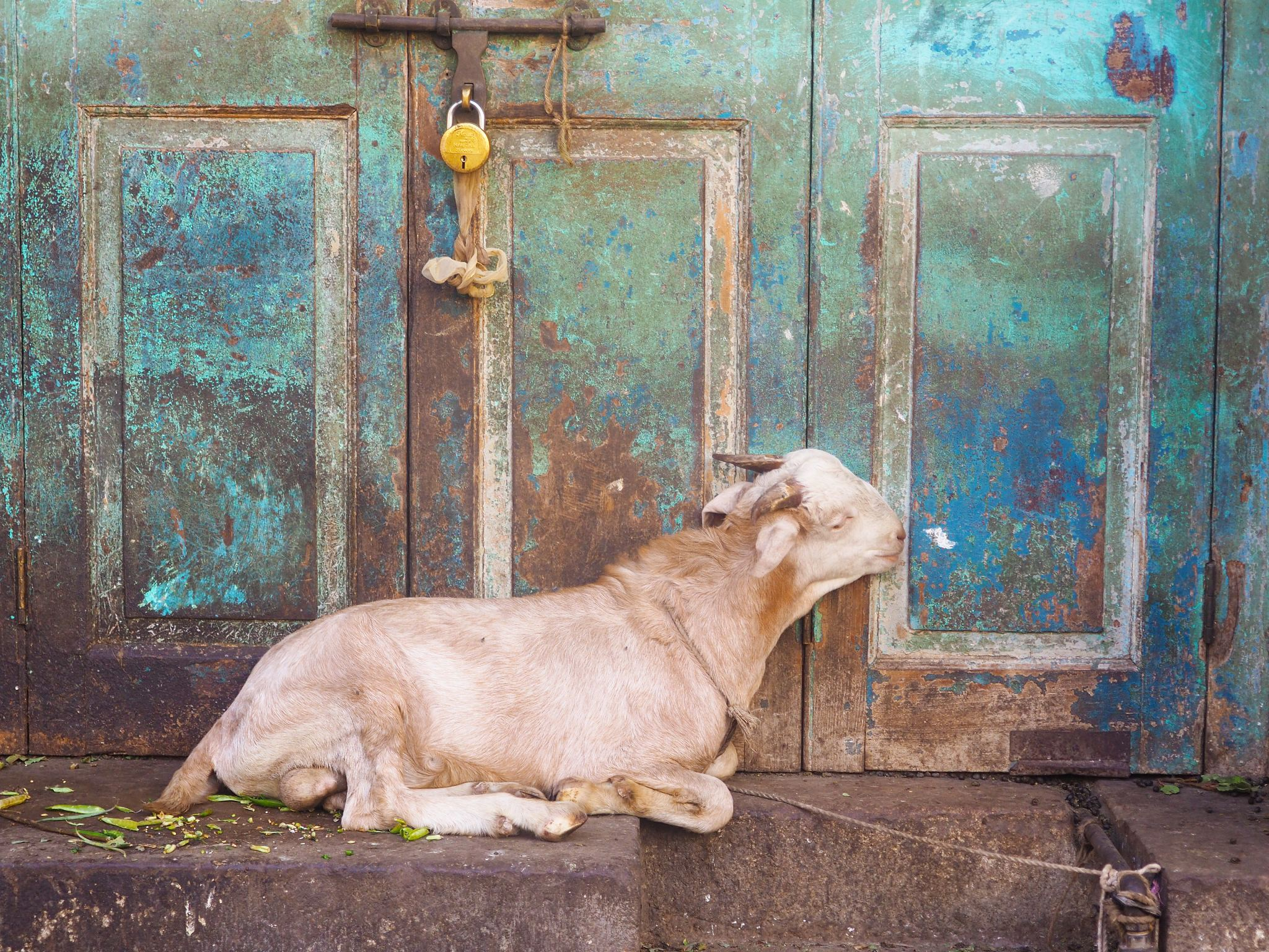 Visiting India Tips